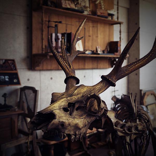 撮影,スタジオ,リース,アンティーク,標本,剥製,骨格,V. Sabrina