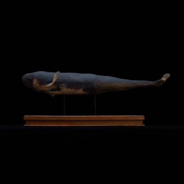 展示会,撮影,リース,レンタル,貸し出し,アンティーク,剥製,スナメリ,標本,鯨,くじら,魚