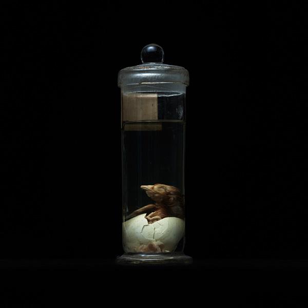 展示会,撮影,リース,レンタル,貸し出し,アンティーク,ホルマリン,鶉,鳥,卵,標本,液浸標本