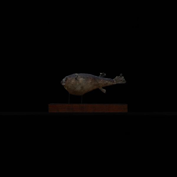 展示会,撮影,リース,レンタル,貸し出し,アンティーク,剥製,標本,フグ,河豚,魚,台座