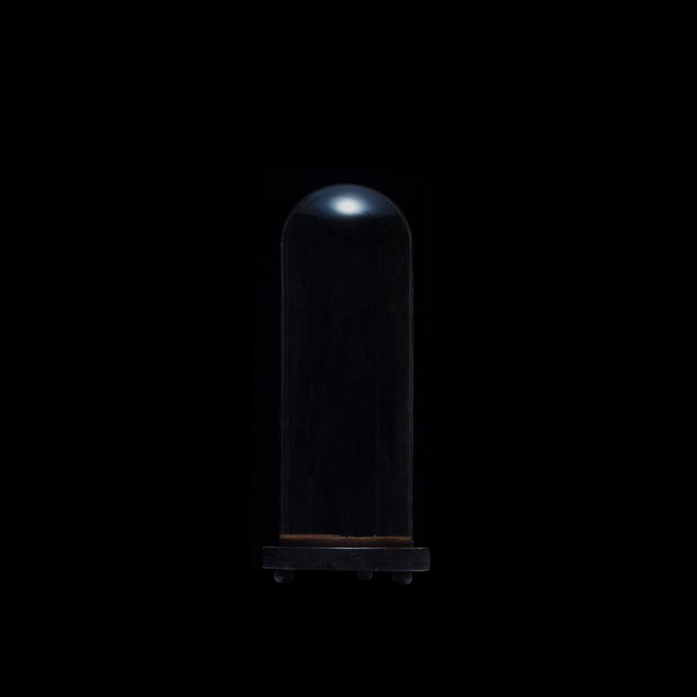 イギリス,グラスドーム,ガラスドーム,アンティーク,19世紀,ヨーロッパ,西洋,フランス